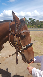 Double Baracoo bridle North Motton Central Coast Preview