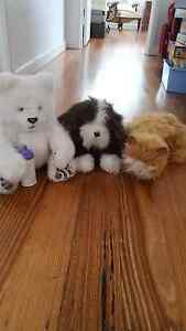 Fur real panda, dog and cat Carnegie Glen Eira Area Preview