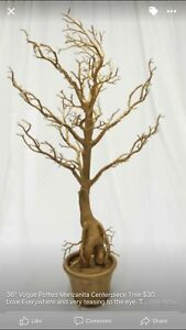 Manzanita Trees for Sale