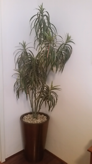 Artificial pot and plant great condition 6ft
