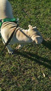 Dog friendly Sunshine West Brimbank Area Preview