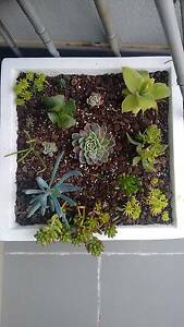 succulents garden in Styling quality pot Hampton Bayside Area Preview