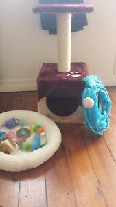 Kitten play pack (for kittens only pls) Alderley Brisbane North West Preview