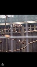 Birds! Craigieburn Hume Area Preview