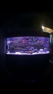 4ft fish tank setup Cessnock Cessnock Area Preview