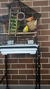 Two female canaries with cage. Fairy Meadow Wollongong Area Preview