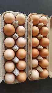 Farm fresh free range eggs Brookfield Melton Area Preview