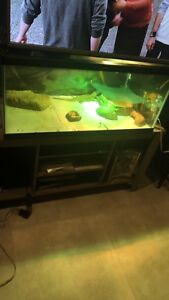 Bearded dragon and cage trade for Xbox one or $200