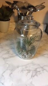 Home modern Large Air plant terrarium rock garden