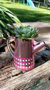 Succulents - in beautiful displays - Great Gift Idea Blackmans Bay Kingborough Area Preview