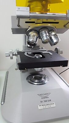 Reichert Zetopan Incidentepi-fluorescence Microscope