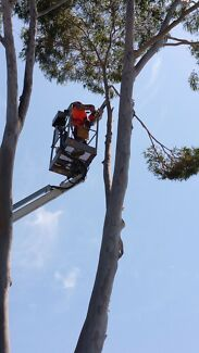 Cheap And Reliable Tree Removal And Stump Grinding Londonderry Penrith Area Preview