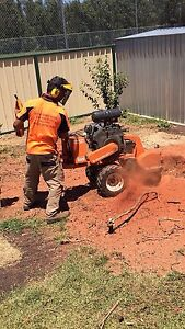Cheap & Affordable Tree Removal / Stump Grinding Sydney City Inner Sydney Preview