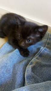 Free kittens giveaway