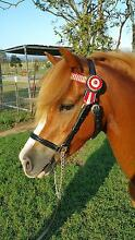 Kids Pony! Lowood Somerset Area Preview