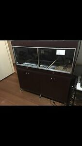 Female Coastal with enclosure FOR SALE SNAKE MUST GO ASAP Frankston Frankston Area Preview