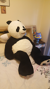 Giant Panda Bear Point Cook Wyndham Area Preview
