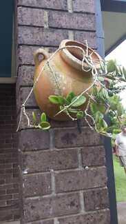 Terracotta Wall Pots