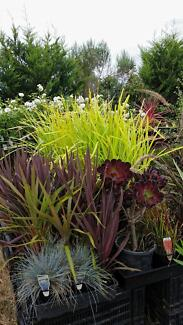 HUGE PLANT SALE, OPEN FRIDAY, SATURDAY & SUNDAY 9AM TO 5PM Skye Frankston Area Preview