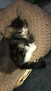 3 gorgeous, affectionate kittens ready for their forever homes
