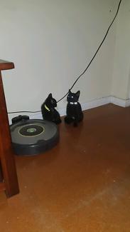 2 kittens swap for dog