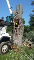 Grover Brothers Tree Care