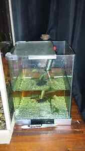 UPDATE 2: Fish, tanks, everything for sale. Mayfield East Newcastle Area Preview
