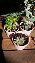 Assorted Plants from $1.00 Leda Kwinana Area Preview