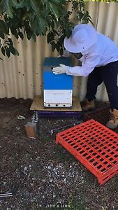 Bee hive & bees for sale Canning Vale Canning Area Preview