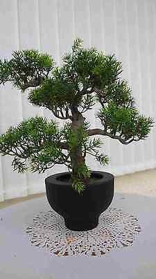 Bonsai Baum Koi Saikei künstliche Pflanzen Bonsai Japan Kiefer x5-33cm.hoch