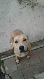 URGENT! Free 1 Year old dog to good home. Golden Square Bendigo City Preview