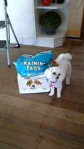 Puppy training pads Tarleton Latrobe Area Preview
