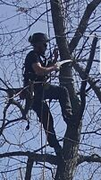 FREE QUOTES!! Professional and safe Tree Service