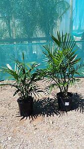 Cascade Palms Melton Melton Area Preview