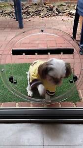 Dog Doors, Cat Flaps, Doggy Doors, Pet Doors West Perth Perth City Area Preview