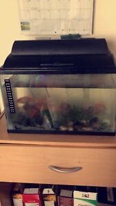 Fish with tank and all things
