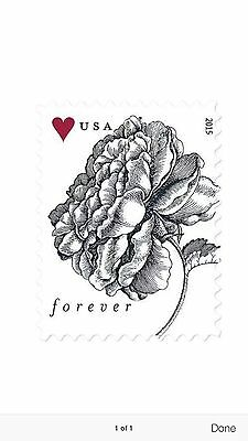 USPS New A Vintage Rose Forever Stamp Sheet of 20 (100 Sheets)