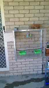 Breeding pair budgies and cage Urraween Fraser Coast Preview