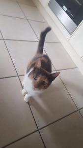 4 year old female cat Bray Park Pine Rivers Area Preview