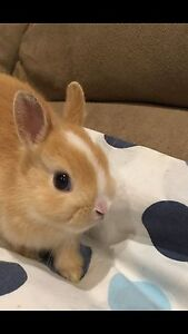 40 soft AND SWEET BABY BUNNY KISSES!!!   :)) Burnside Melton Area Preview