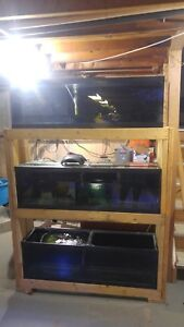 Various stacks of aquariums for sale