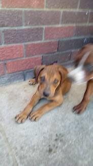 ***PUPPY AVAILABLE***