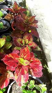 PLANT SALE (ONLY THIS WEEKEND) FROM $2 Marsden Logan Area Preview