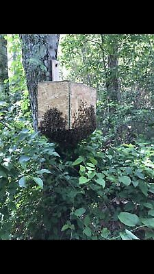 Recipehoney Bee Swarm Lure For Trapping Honey Bees