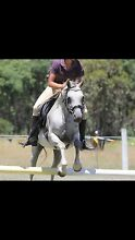 Small adult or child's pony Geham Toowoomba Surrounds Preview