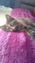 9 week old Kittens waiting for their forever homes!!!! Prestons Liverpool Area Preview