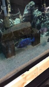Star sapphire breeding group for sell