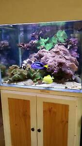 Marine Aquarium North Perth Vincent Area Preview