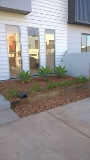 Agaves Established Ready To Plant