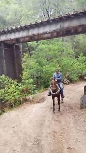 Very Quiet Horse beginner Horse Pemberton Manjimup Area Preview